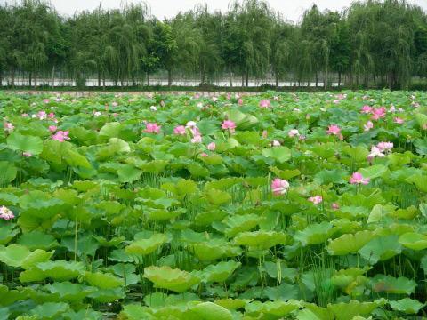 Kunming Daguan Park