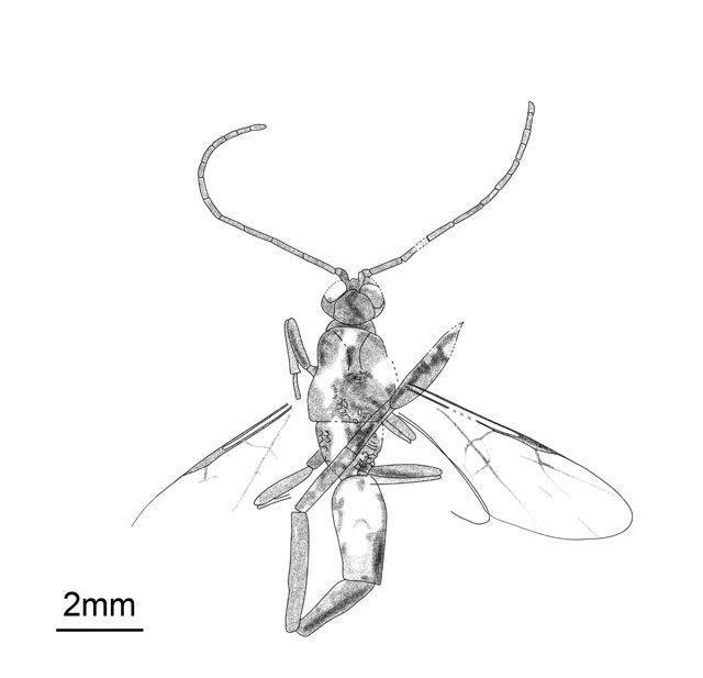 CNU Student Names New Species with Shoushida