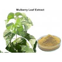 White Mulberry Leaf Extract Powder , Organic Mulberry Leaf Extract Weight Loss