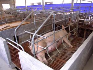 Pig Farrowing Pen Pig Farm Equipment For Sale Pig Farm