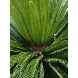 outdoor foliage plants, outdoor foliage plants Manufacturers and ...