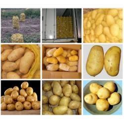 China Cold Storage Yellow Organic Potatoes Nature For Vegatable Shop on sale