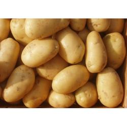 China 75g - 200g Fresh Organic Potatoes Smooth Surface For Pantothenic Acid on sale