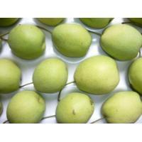 Fresh Shandong Pear