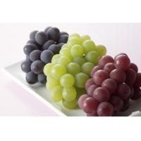 fruit powder grape powder new product (Vitis vinifera L) for grape juice