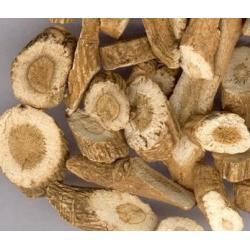 China 100% Natural Wild Indigowoad Root / Ban Lan Gen-Isatidis Root Chinese Herbs on sale
