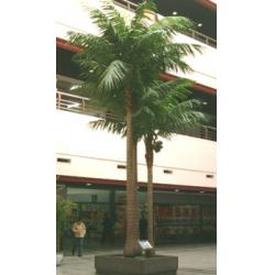 China Hot Sale Artificial Outdoor Coconut Tree/Fake Coconut Trees for Outdoor & Indoor Decoratio on sale