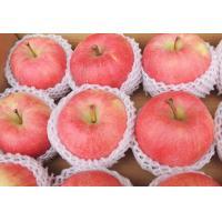 60mm - 65mm Fresh Fruit Fuji Red Apple , Health No Pesticide Residue