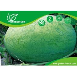 China Light green rind Organic Watermelon Seeds with netted stripes on sale