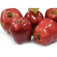 Delicious Sweet Red Apple With 18 KG - 72 , 80 , 96 , 112 Pieces