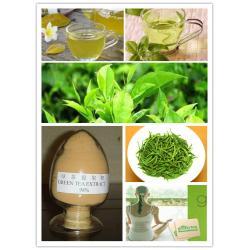 China Green tea extract powder on sale
